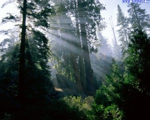 foreste_59